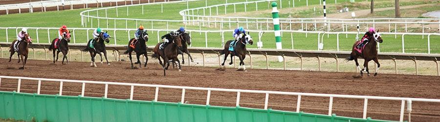 Cheltenham 2020 horse race